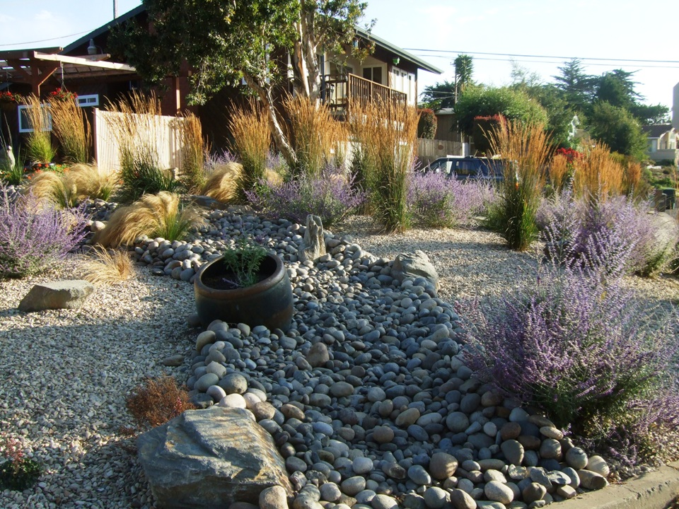 Blog turiace landscaping for Drought tolerant yard