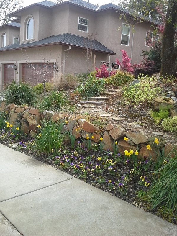 Landscape Design Photos From Newcastle, CA