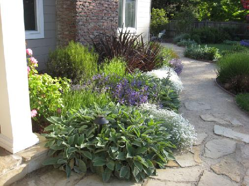 Blog turiace landscaping for Drought tolerant front garden designs
